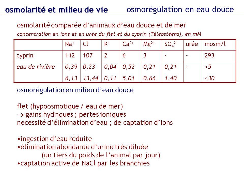 osmolarité et milieu de vie osmorégulation en eau douce