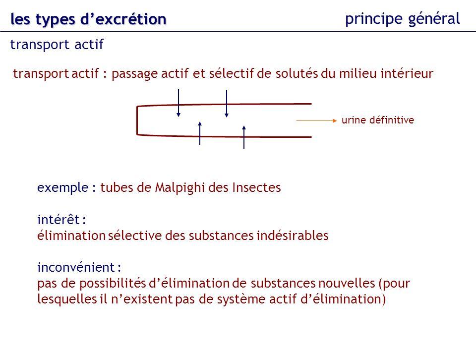 les types d'excrétion principe général transport actif