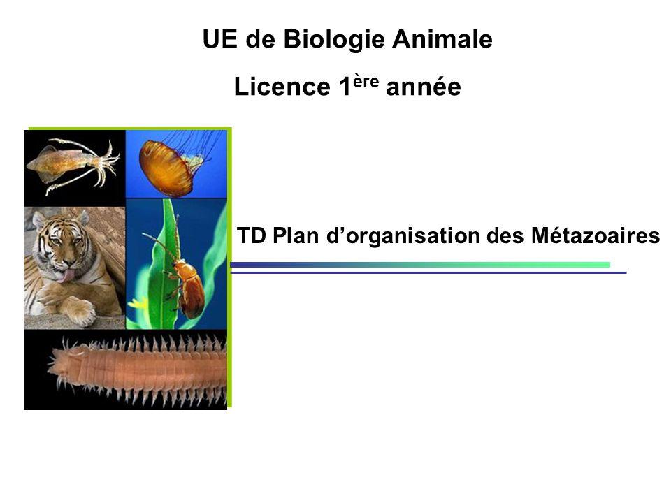 UE de Biologie Animale Licence 1ère année