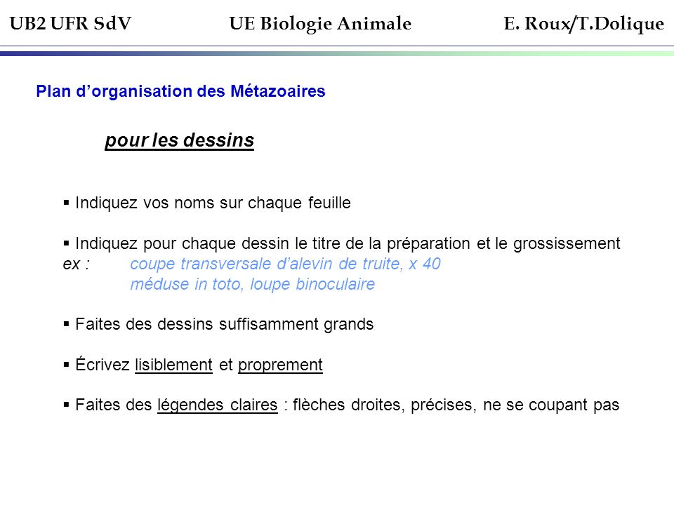Ue de biologie animale licence 1 re ann e ppt video for Faites vos propres plans libres