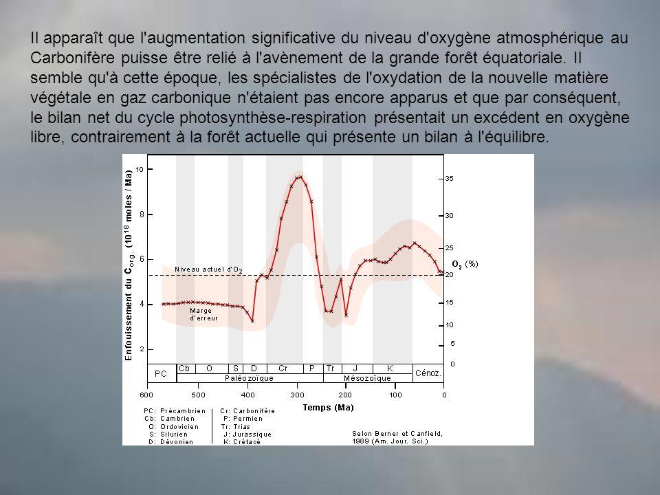 Il apparaît que l augmentation significative du niveau d oxygène atmosphérique au Carbonifère puisse être relié à l avènement de la grande forêt équatoriale.