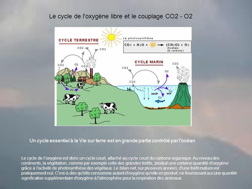Le cycle de l oxygène libre et le couplage CO2 - O2