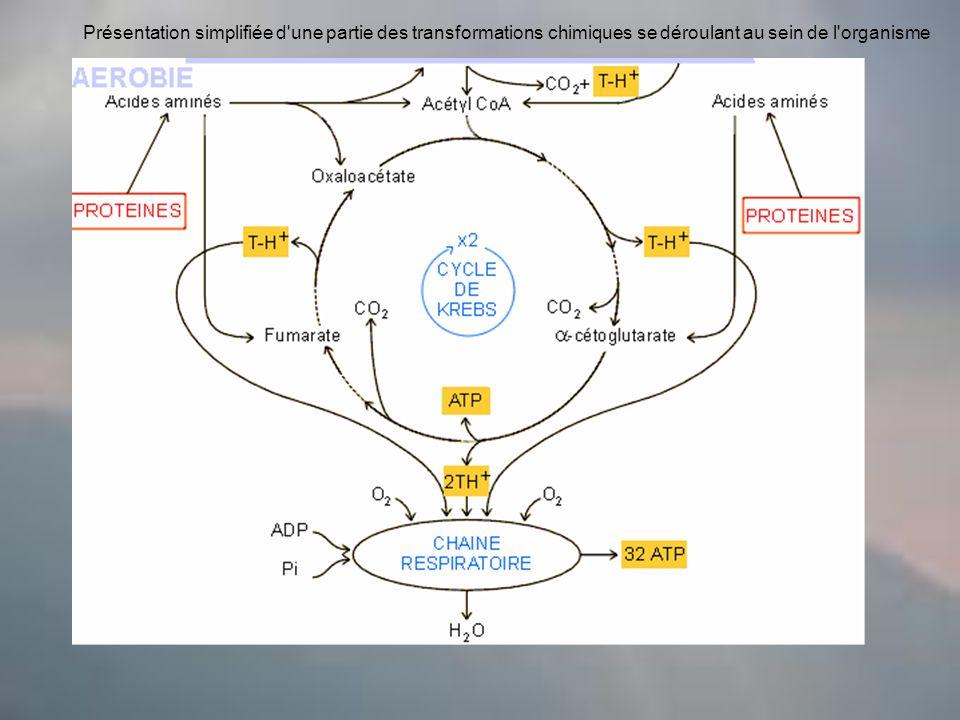 Présentation simplifiée d une partie des transformations chimiques se déroulant au sein de l organisme
