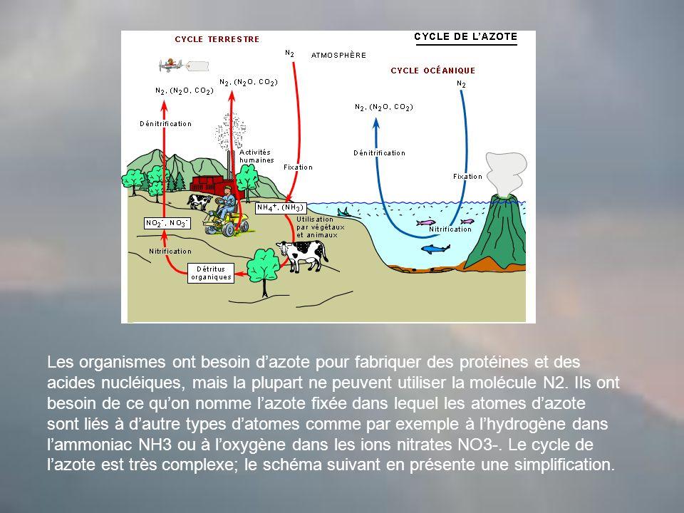 Les organismes ont besoin d'azote pour fabriquer des protéines et des acides nucléiques, mais la plupart ne peuvent utiliser la molécule N2.