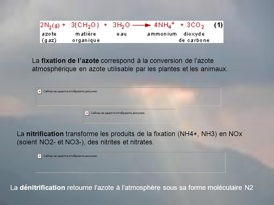 La fixation de l'azote correspond à la conversion de l'azote atmosphérique en azote utilisable par les plantes et les animaux.