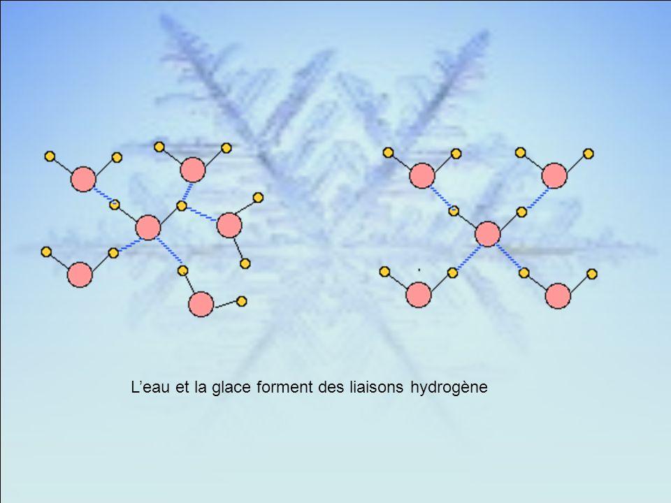 L'eau et la glace forment des liaisons hydrogène