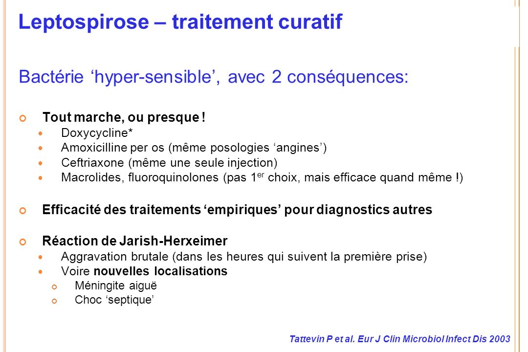 Leptospirose – traitement curatif
