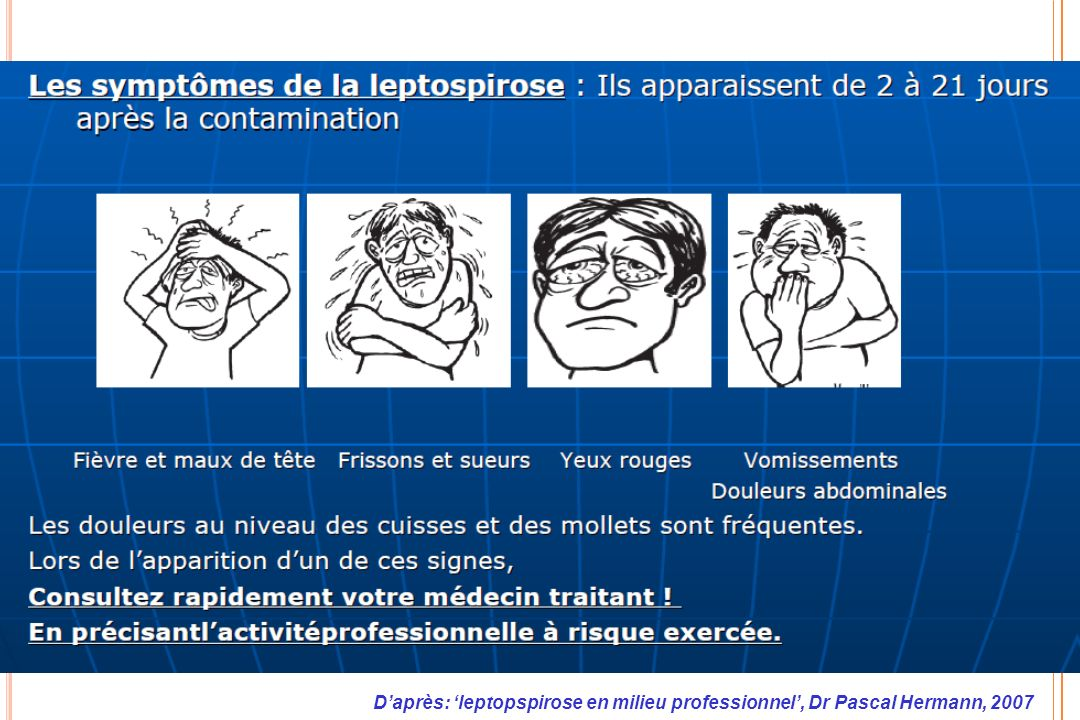 D'après: 'leptopspirose en milieu professionnel', Dr Pascal Hermann, 2007