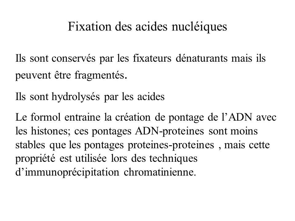Fixation des acides nucléiques