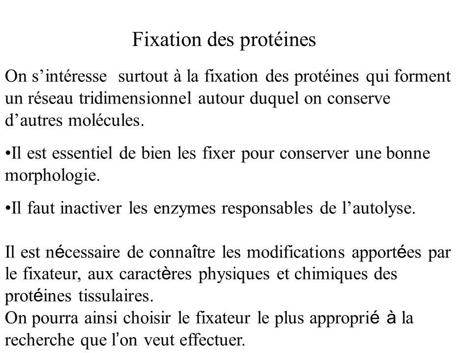 Fixation des protéines