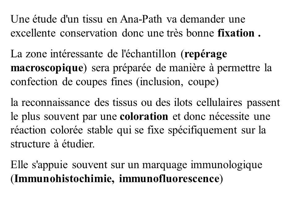 Une étude d un tissu en Ana-Path va demander une excellente conservation donc une très bonne fixation .