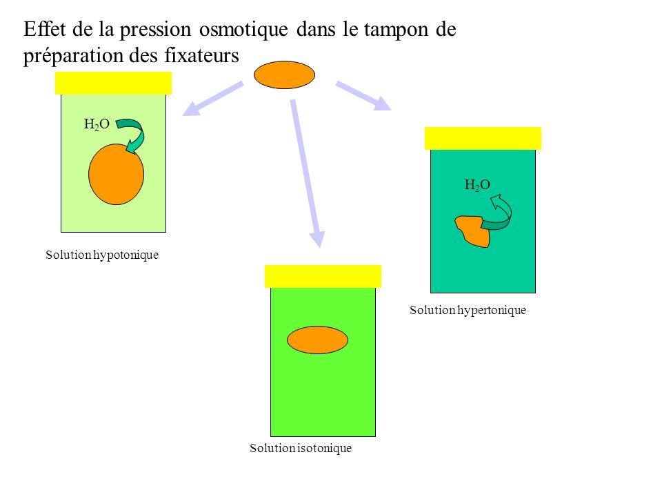 Effet de la pression osmotique dans le tampon de préparation des fixateurs