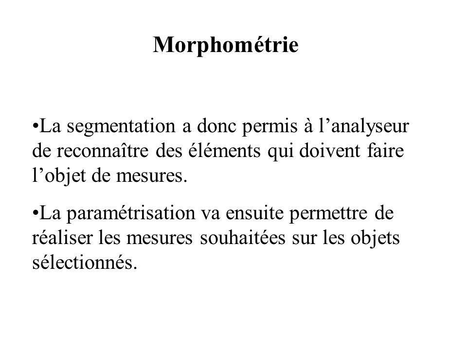 MorphométrieLa segmentation a donc permis à l'analyseur de reconnaître des éléments qui doivent faire l'objet de mesures.