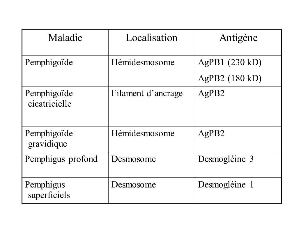 Maladie Localisation Antigène Pemphigoïde Hémidesmosome AgPB1 (230 kD)