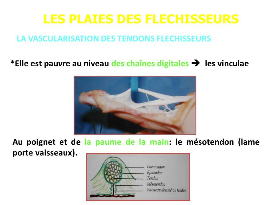 LES PLAIES DES FLECHISSEURS