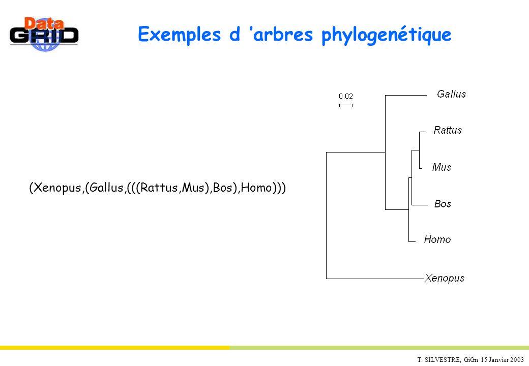 Exemples d 'arbres phylogenétique