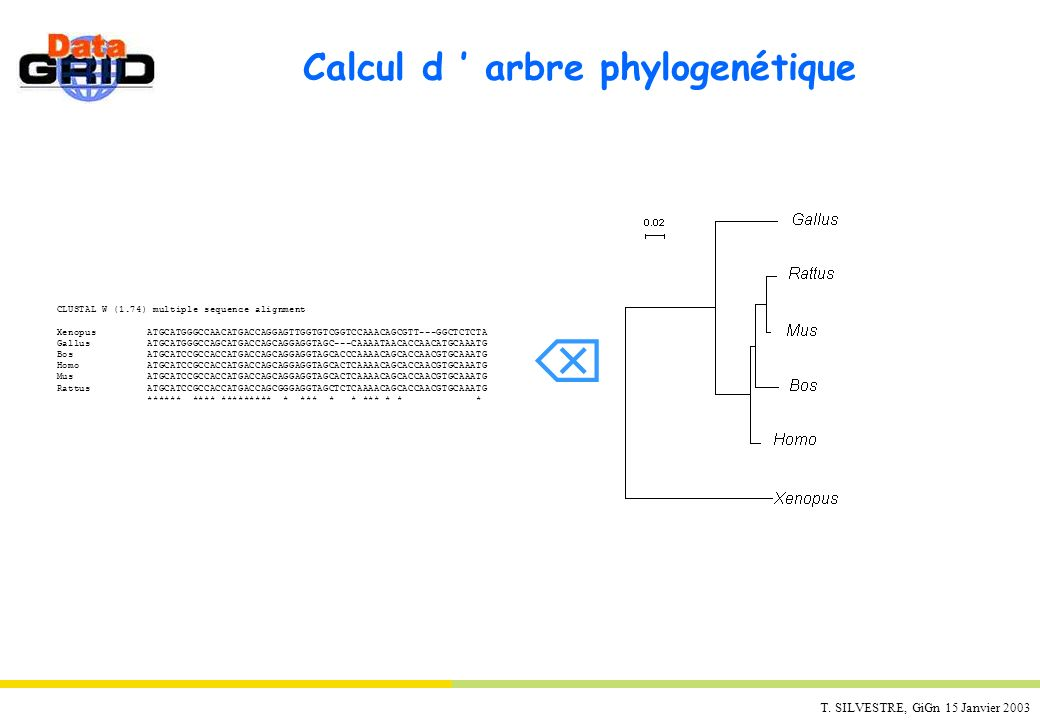 Calcul d ' arbre phylogenétique