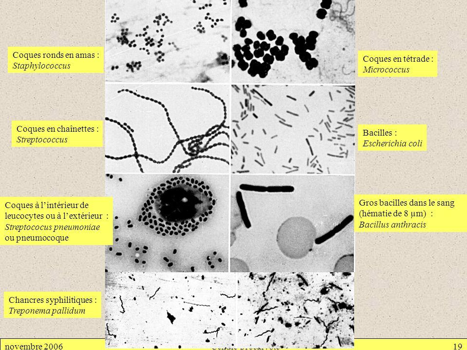 Coques ronds en amas : Staphylococcus. Coques en tétrade : Micrococcus. Coques en chaînettes : Streptococcus.