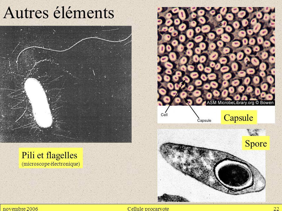 (microscope électronique)