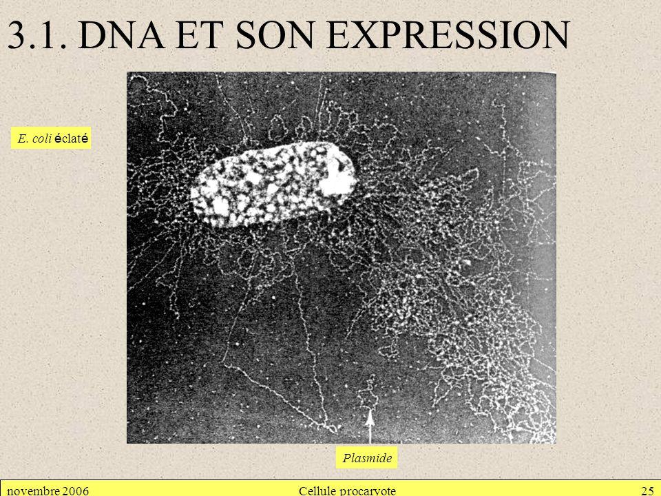 3.1. DNA ET SON EXPRESSION E. coli éclaté Plasmide novembre 2006