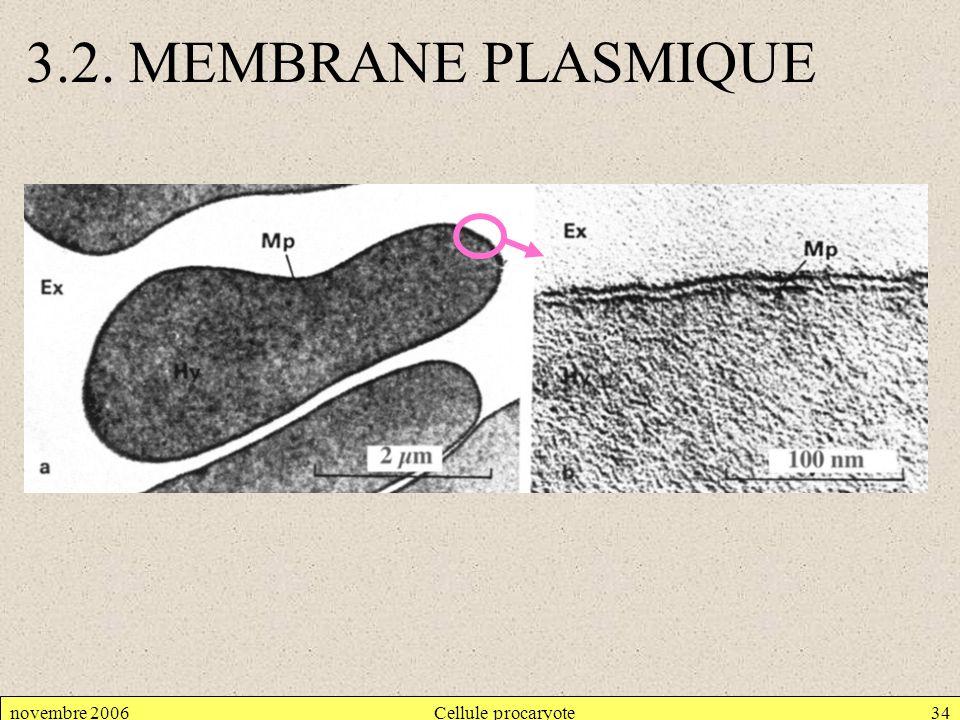 3.2. MEMBRANE PLASMIQUE novembre 2006 Cellule procaryote