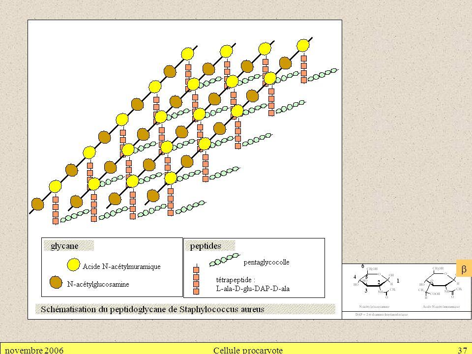 6  4 5 2 1 3 novembre 2006 Cellule procaryote