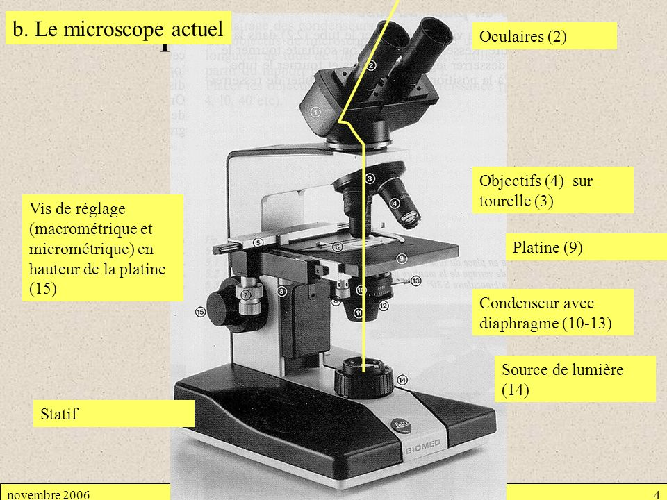 Microscope optique b. Le microscope actuel Oculaires (2)