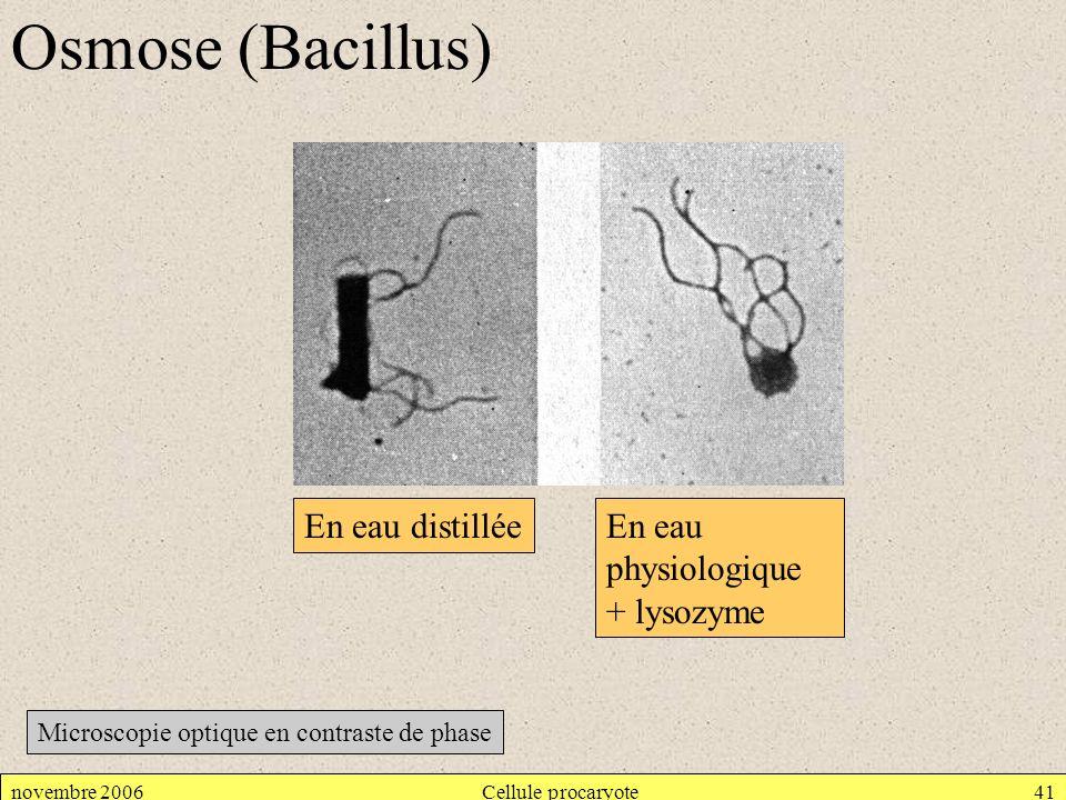 Osmose (Bacillus) En eau distillée En eau physiologique + lysozyme