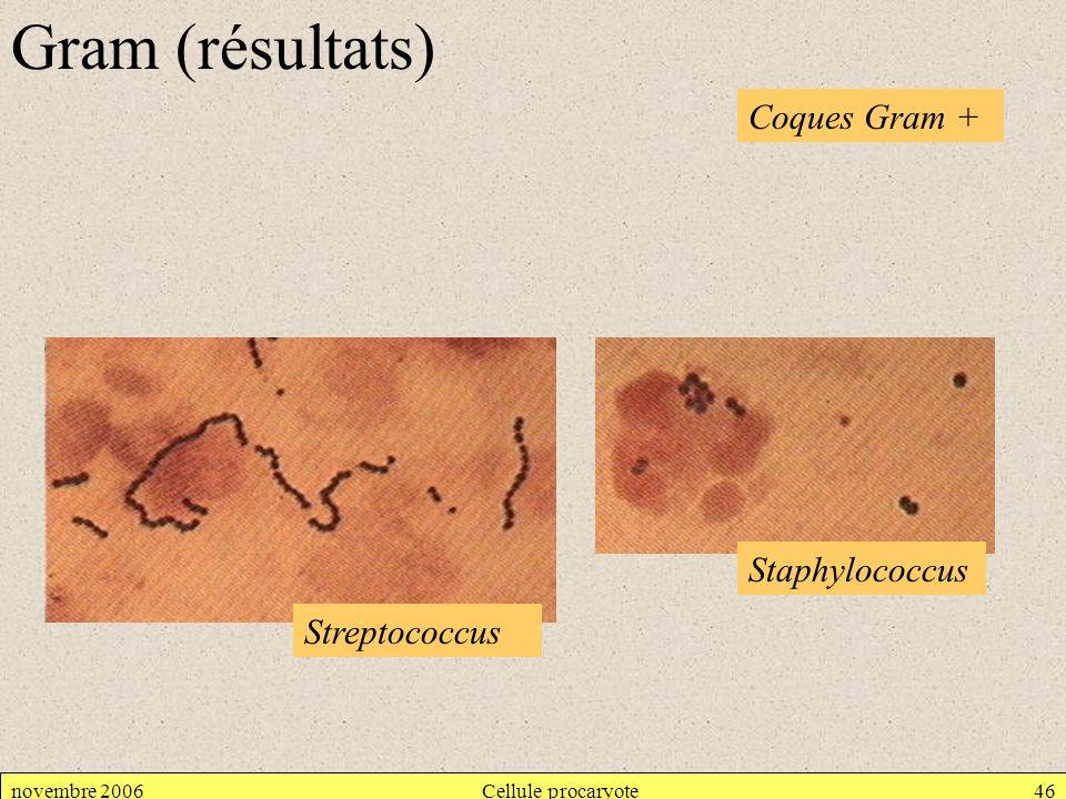 Gram (résultats) Coques Gram + Staphylococcus Streptococcus
