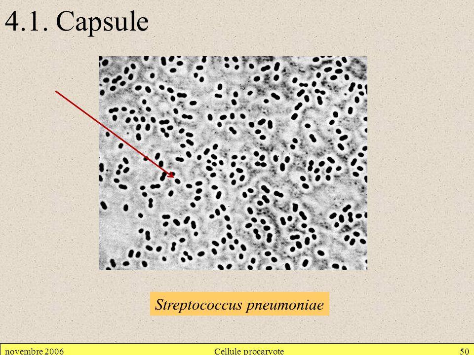 4.1. Capsule Streptococcus pneumoniae novembre 2006 Cellule procaryote