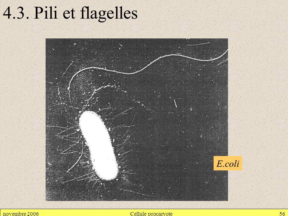 4.3. Pili et flagelles E.coli novembre 2006 Cellule procaryote