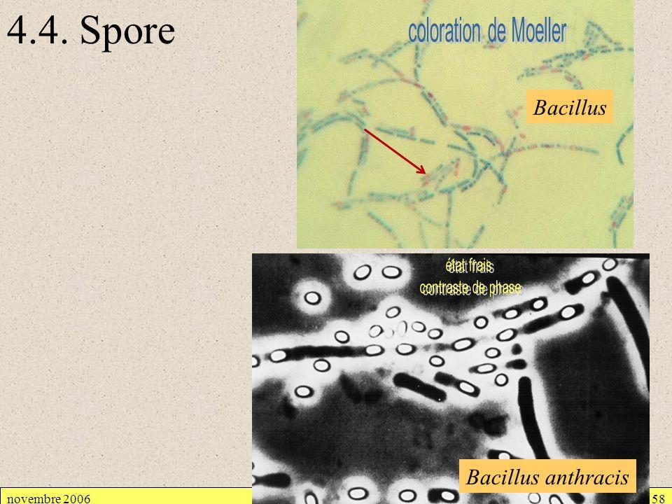 4.4. Spore coloration de Moeller Bacillus état frais