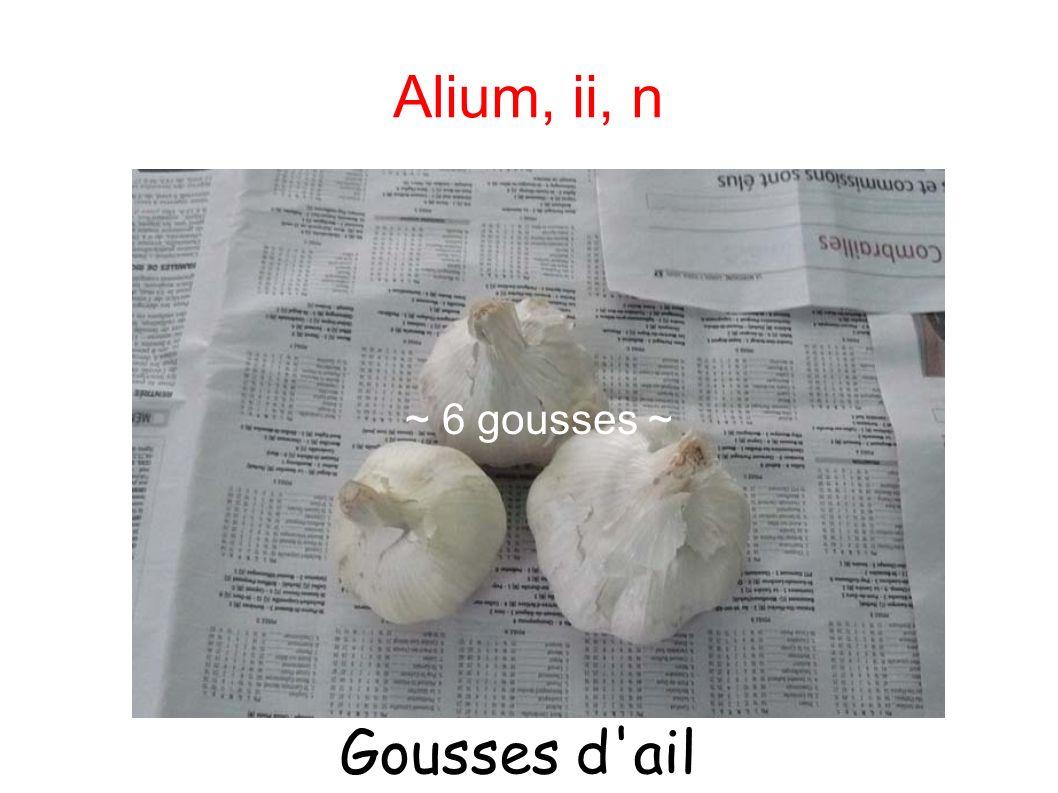 Alium, ii, n ~ 6 gousses ~ ~ 6 gousses d ail ~ Gousses d ail