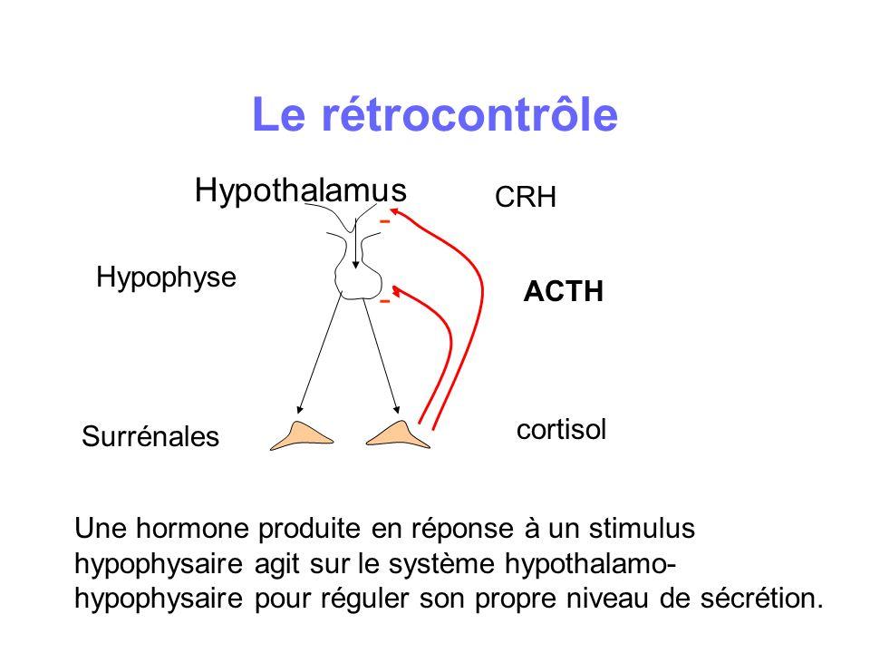 Le rétrocontrôle Hypothalamus - - CRH Hypophyse ACTH cortisol
