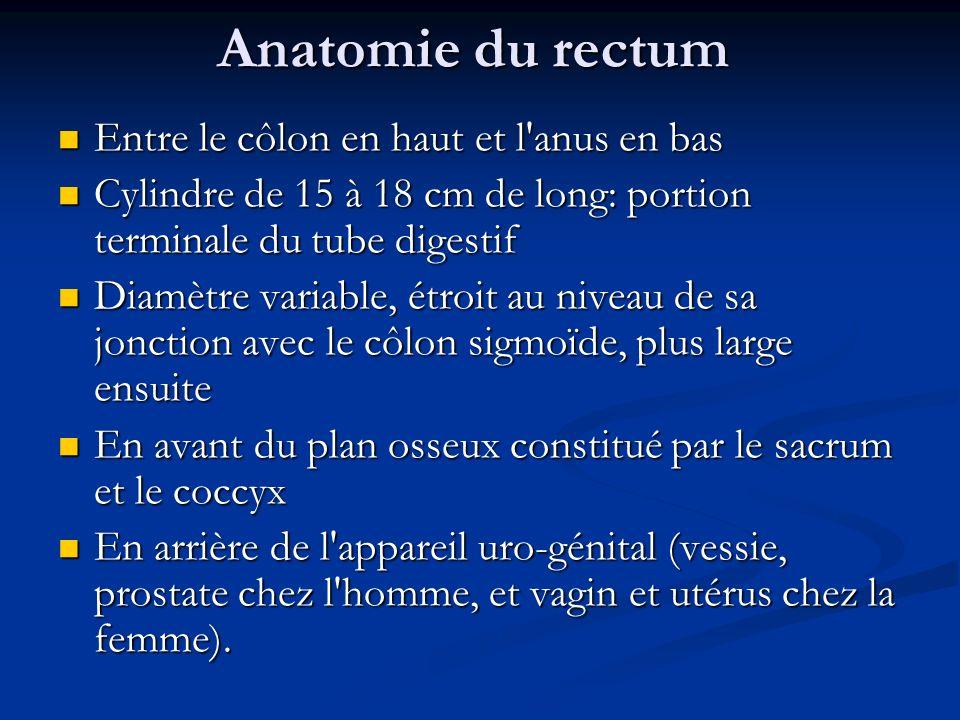 Anatomie du rectum Entre le côlon en haut et l anus en bas