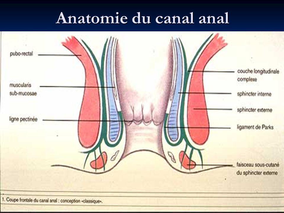 Anatomie du canal anal