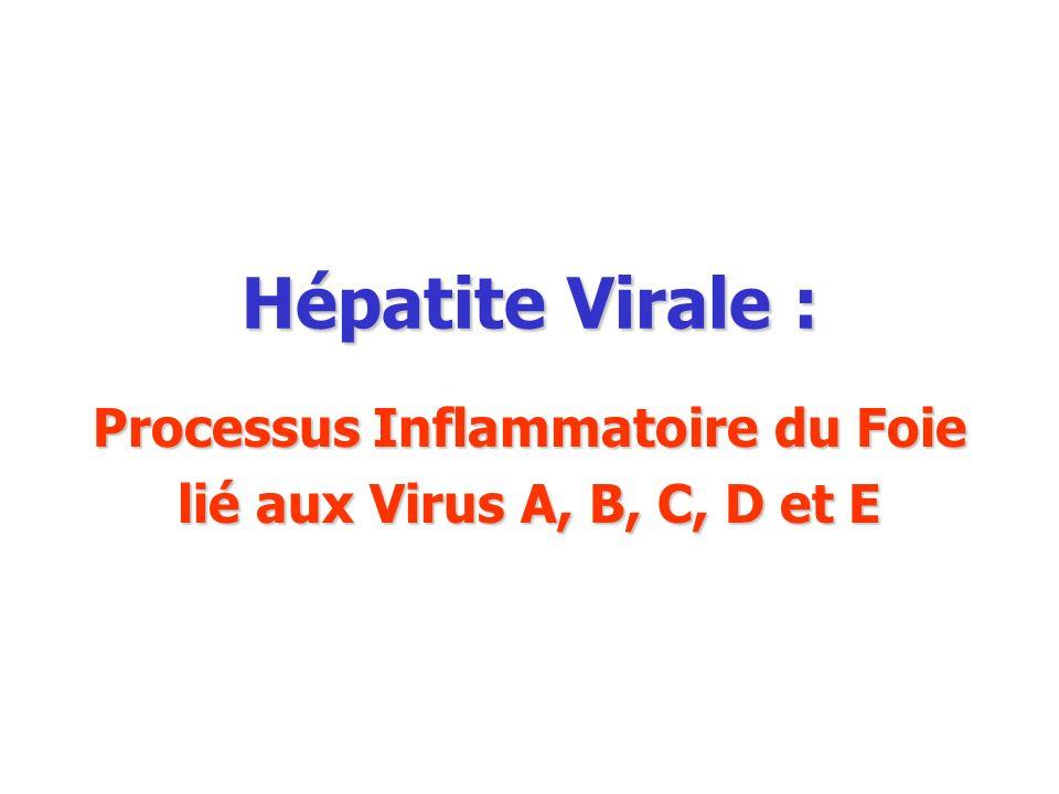 Processus Inflammatoire du Foie lié aux Virus A, B, C, D et E