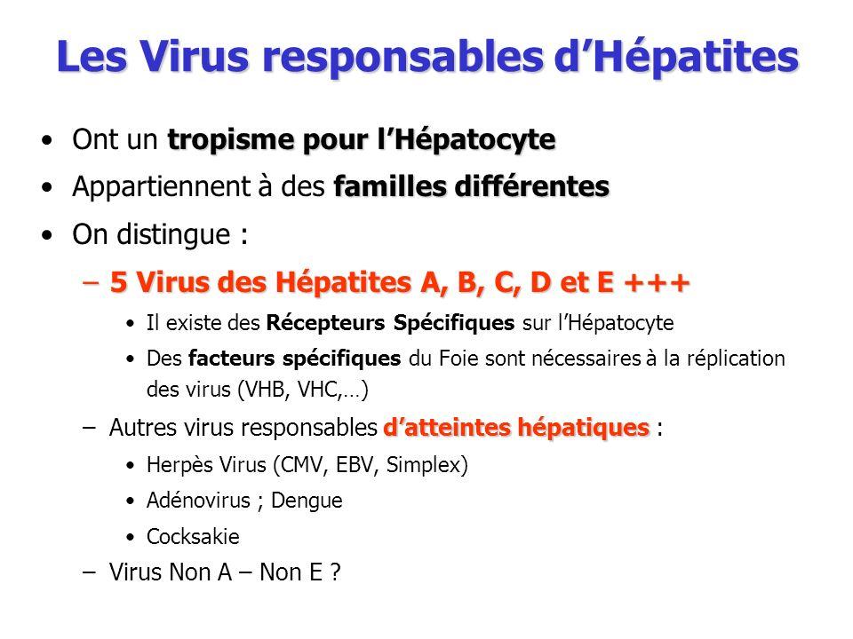Les Virus responsables d'Hépatites