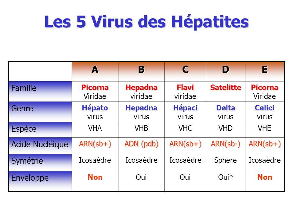 Les 5 Virus des Hépatites