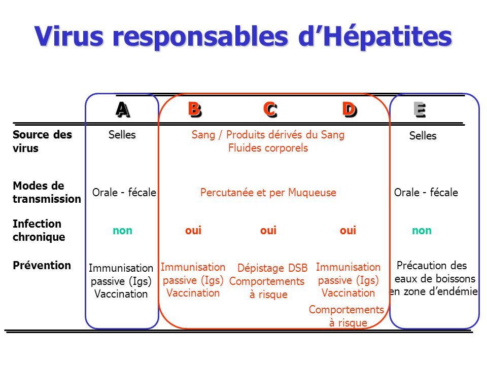 Virus responsables d'Hépatites
