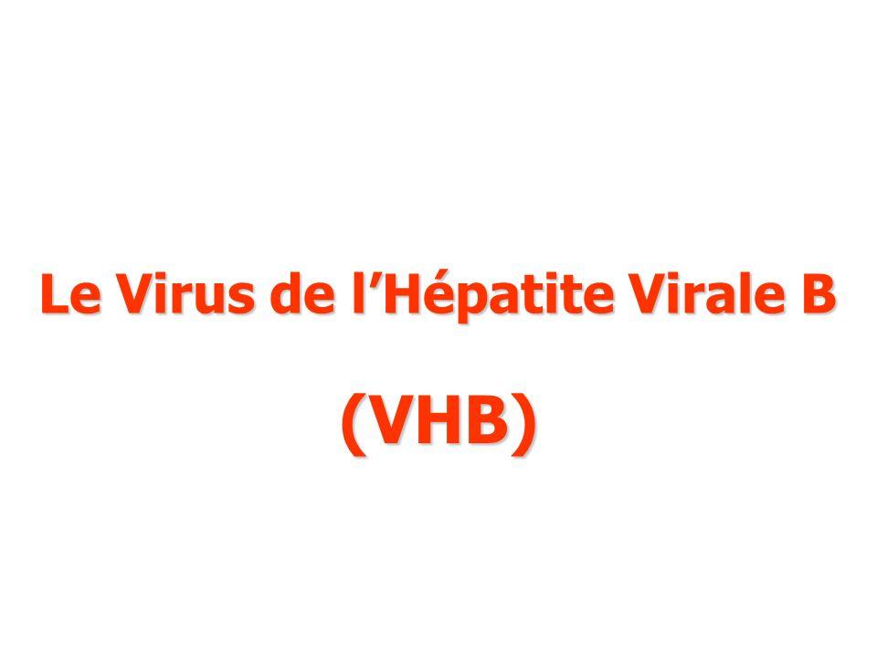 Le Virus de l'Hépatite Virale B