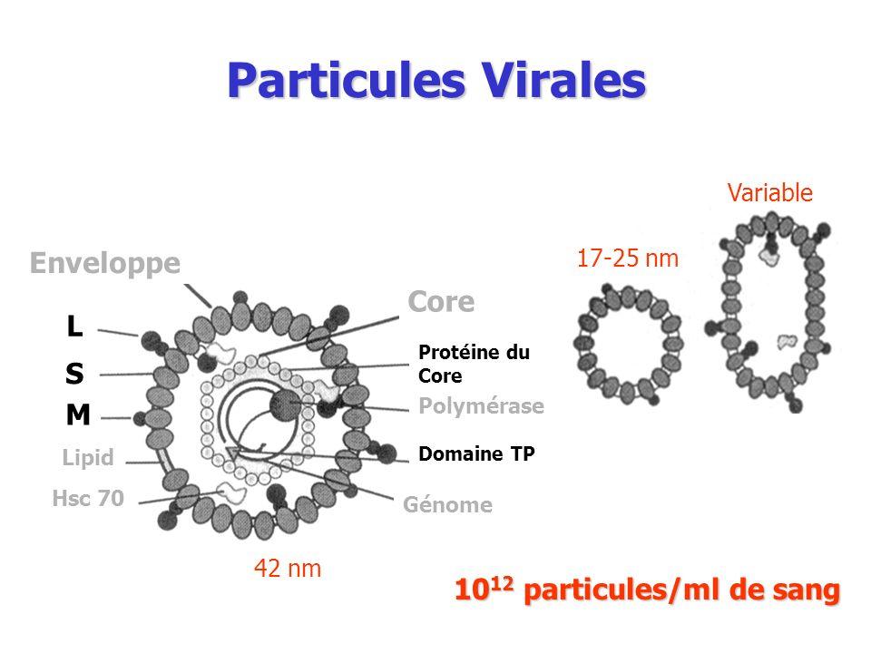 Particules Virales Enveloppe Core L S M 1012 particules/ml de sang