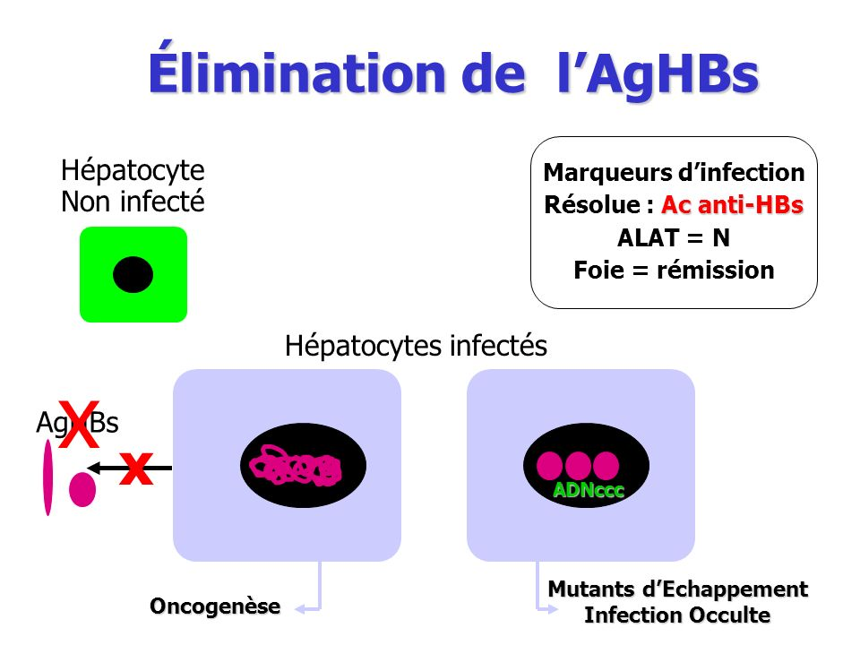 Marqueurs d'infection Résolue : Ac anti-HBs Mutants d'Echappement