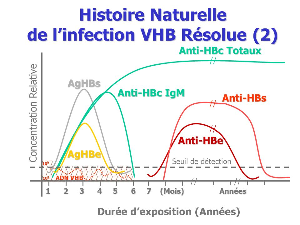Histoire Naturelle de l'infection VHB Résolue (2)