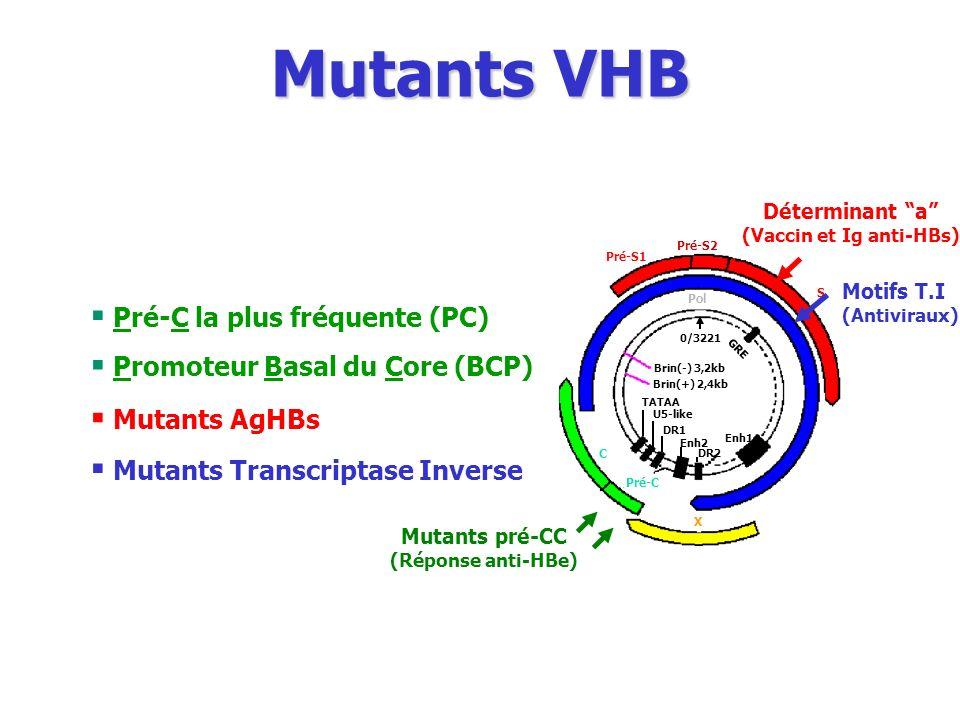 (Vaccin et Ig anti-HBs)