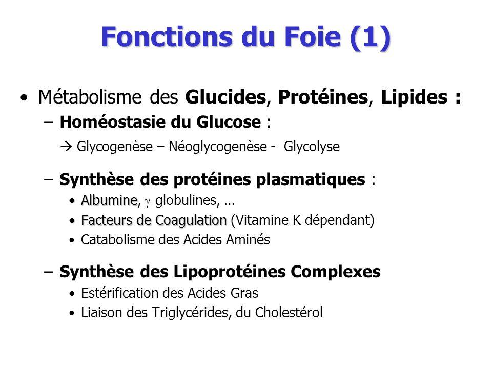 Fonctions du Foie (1) Métabolisme des Glucides, Protéines, Lipides :