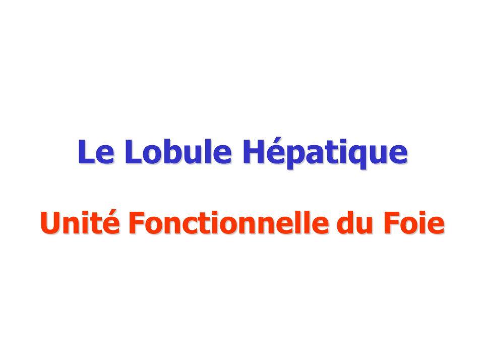 Unité Fonctionnelle du Foie