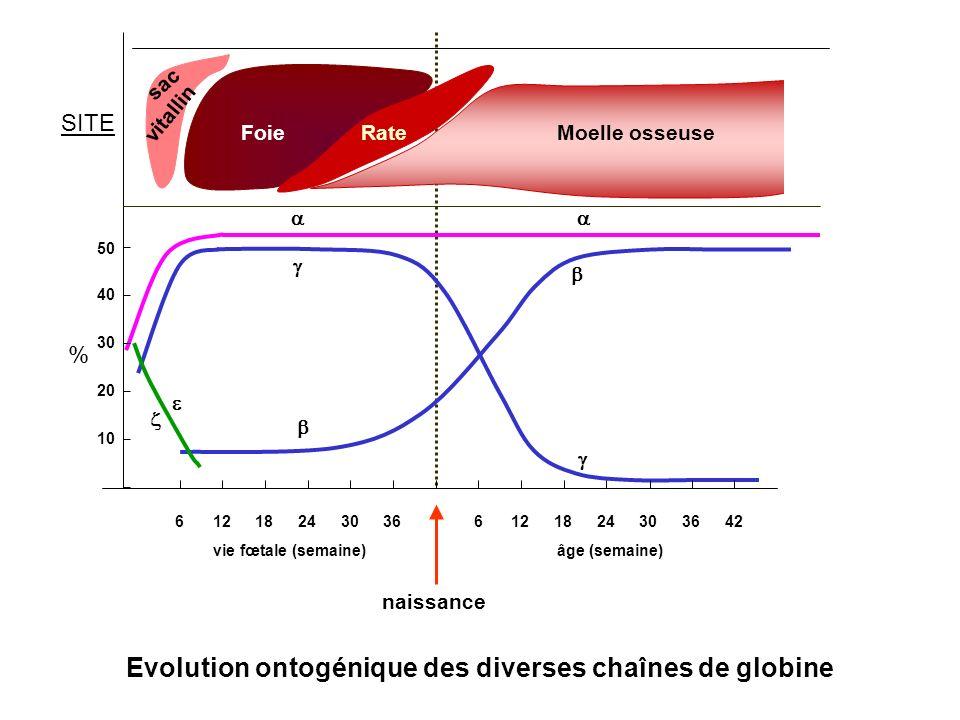 Evolution ontogénique des diverses chaînes de globine