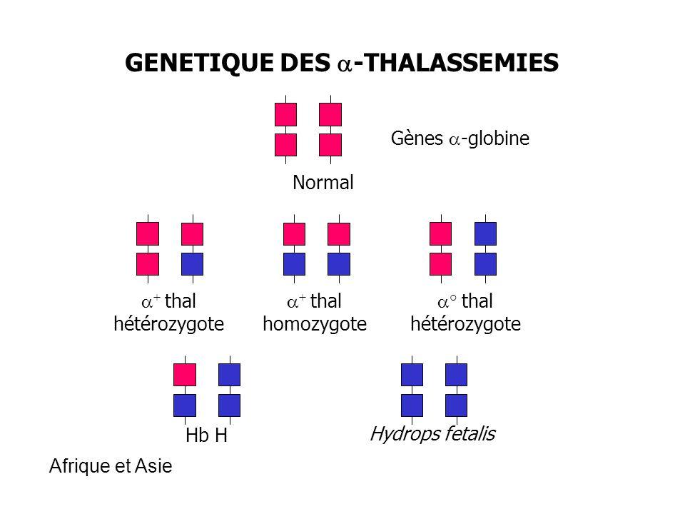 GENETIQUE DES a-THALASSEMIES