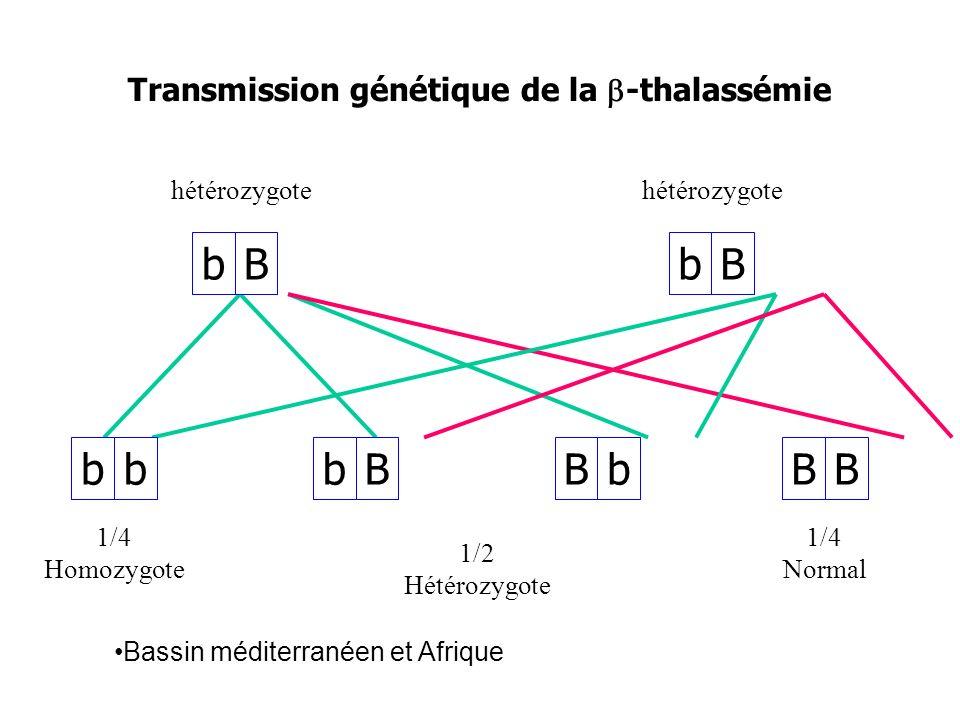 Transmission génétique de la b-thalassémie